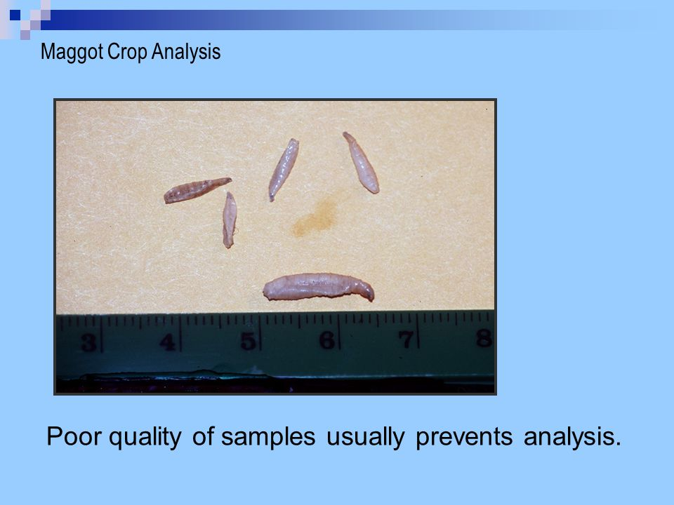 Maggot Crop Analysis Poor quality of samples usually prevents analysis.