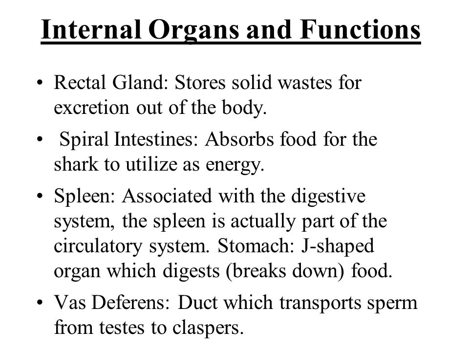 Internal Organs and Functions Rectal Gland: Stores solid wastes for excretion out of the body. Spiral Intestines: Absorbs food for the shark to utiliz