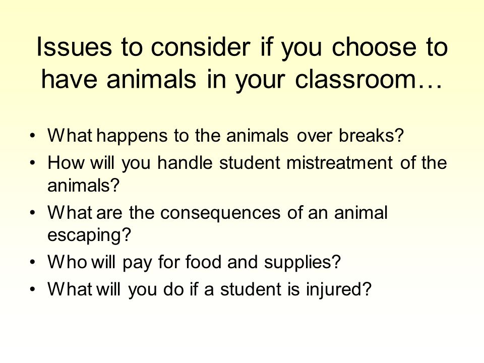 Issues to consider if you choose to have animals in your classroom… What happens to the animals over breaks.