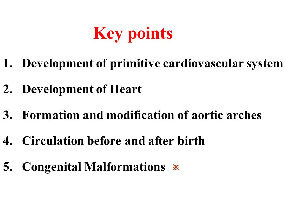 Key points 1.Development of primitive cardiovascular system 2.Development of Heart 3.Formation and modification of aortic arches 4.Circulation before and after birth 5.Congenital Malformations ※