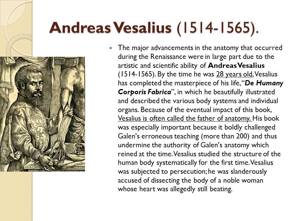 Andreas Vesalius (1514-1565). The major advancements in the anatomy that occurred during the Renaissance were in large part due to the artistic and sc