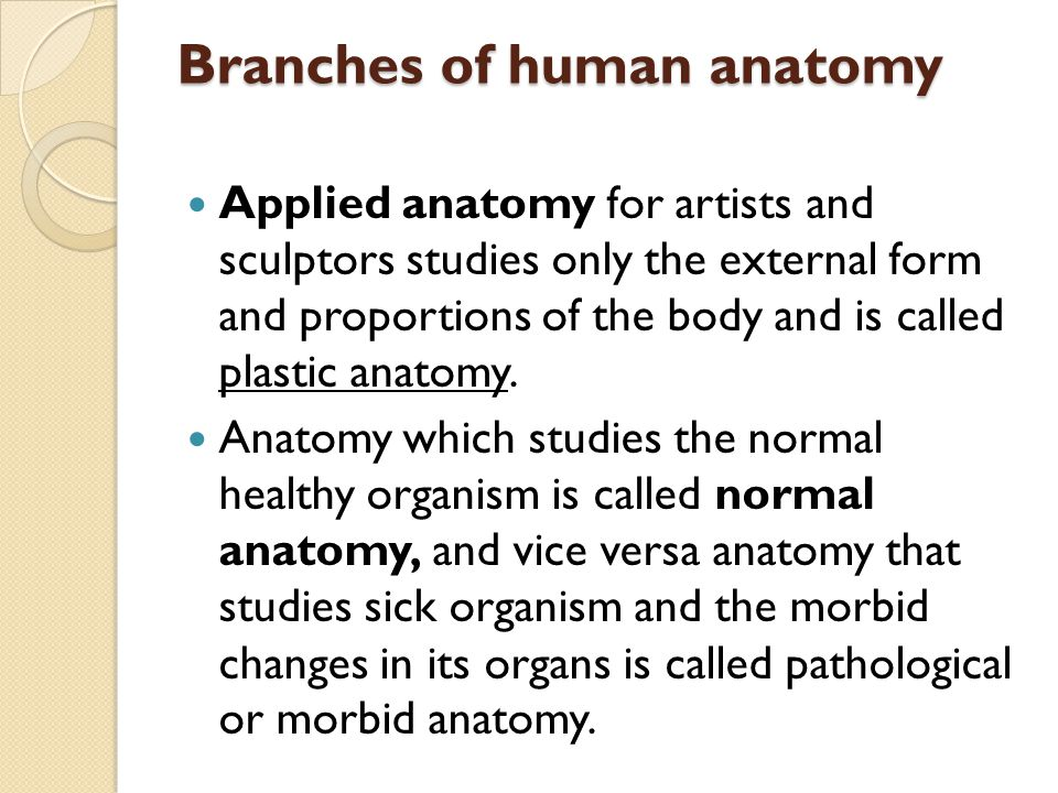 Branches of human anatomy Applied anatomy for artists and sculptors studies only the external form and proportions of the body and is called plastic a