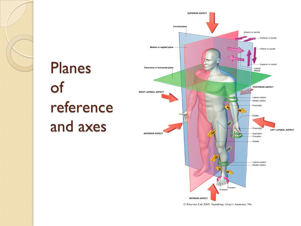 Planes of reference and axes
