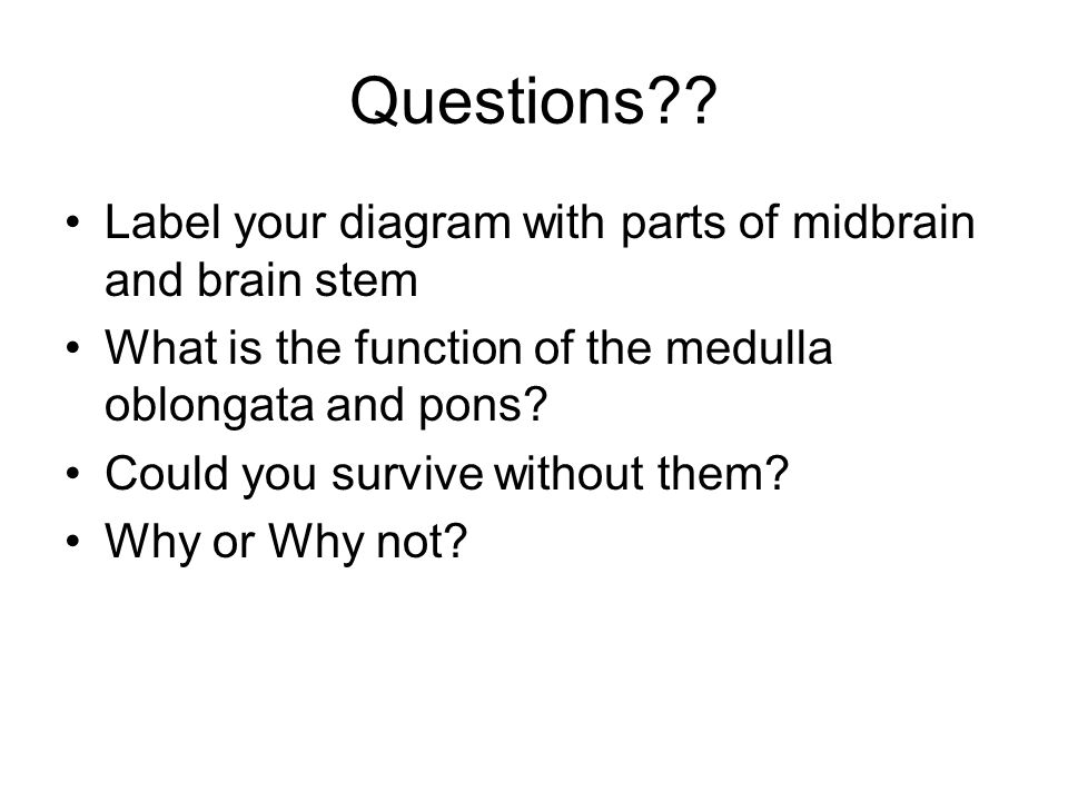 Questions?? Label your diagram with parts of midbrain and brain stem What is the function of the medulla oblongata and pons? Could you survive without