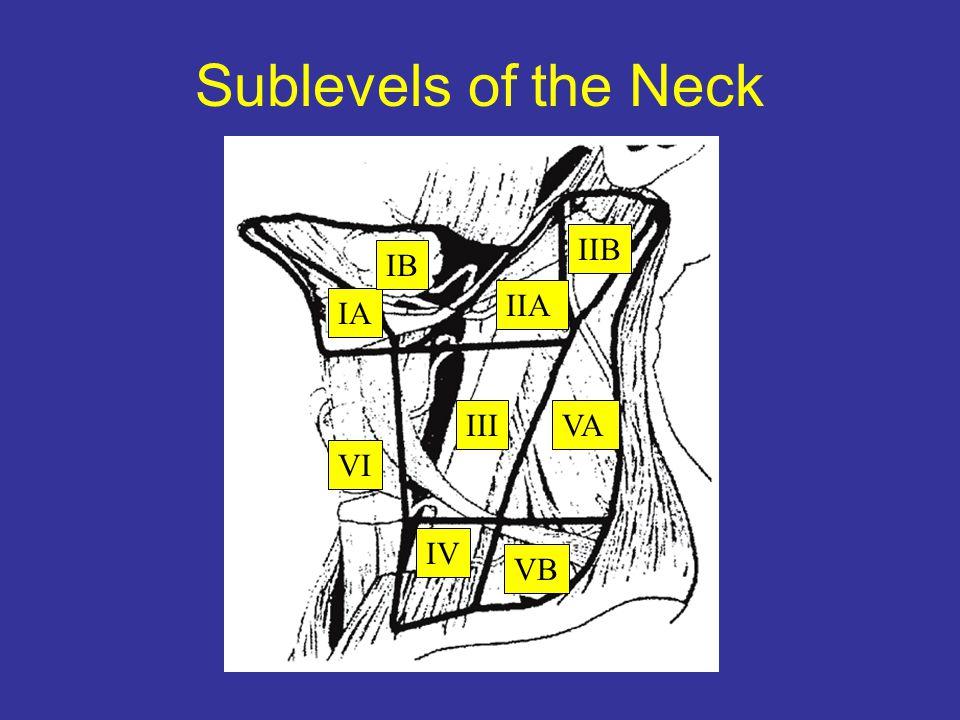Sublevels of the Neck IA IV VI III IIA VA IB IIB VB