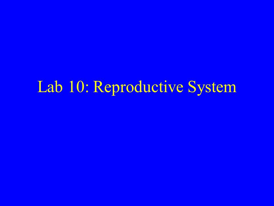 Lab 10: Reproductive System