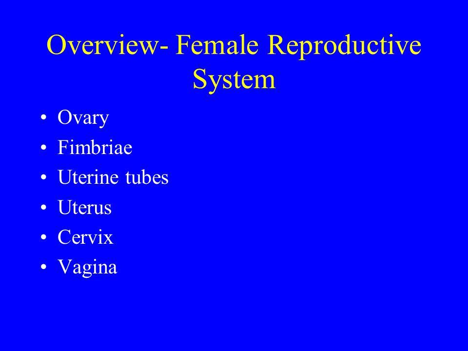 Overview- Female Reproductive System Ovary Fimbriae Uterine tubes Uterus Cervix Vagina