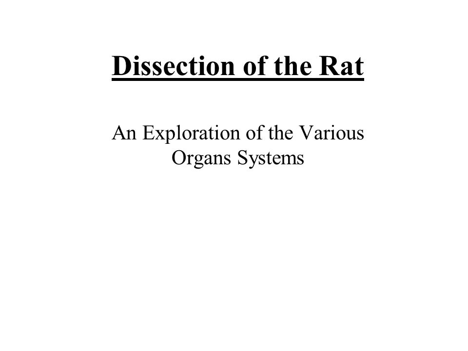 Dissection of the Rat An Exploration of the Various Organs Systems