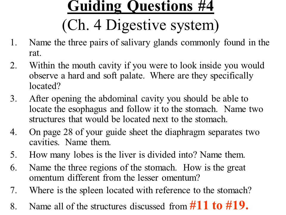 Guiding Questions #4 (Ch. 4 Digestive system) 1.Name the three pairs of salivary glands commonly found in the rat. 2.Within the mouth cavity if you we