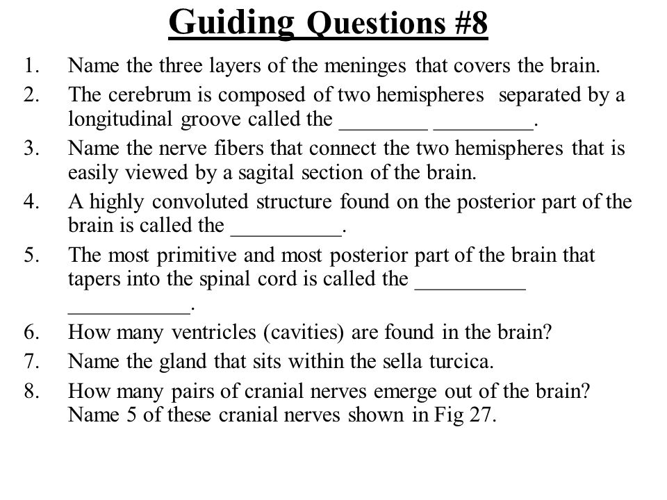 Guiding Questions #8 1.Name the three layers of the meninges that covers the brain. 2.The cerebrum is composed of two hemispheres separated by a longi