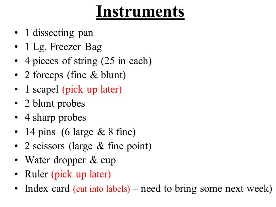 Instruments 1 dissecting pan 1 Lg. Freezer Bag 4 pieces of string (25 in each) 2 forceps (fine & blunt) 1 scapel (pick up later) 2 blunt probes 4 shar