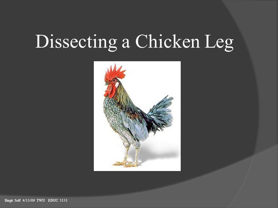 Dissecting a Chicken Leg Birgit Self 4/13/09 TWU EDUC 5131