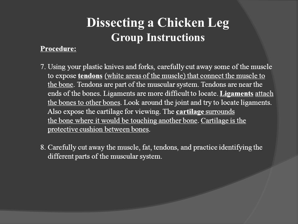 Dissecting a Chicken Leg Group Instructions Procedure: 7. Using your plastic knives and forks, carefully cut away some of the muscle to expose tendons