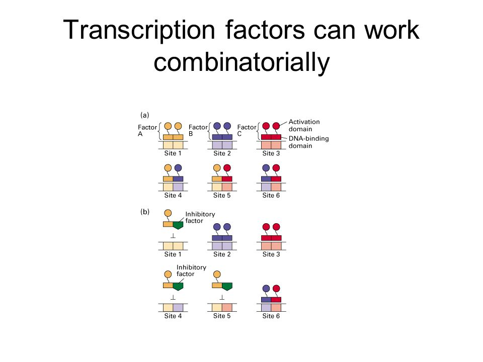 Transcription factors can work combinatorially