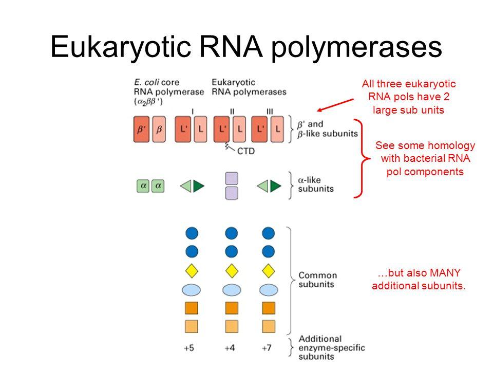 Complexity of eukaryotic transcription