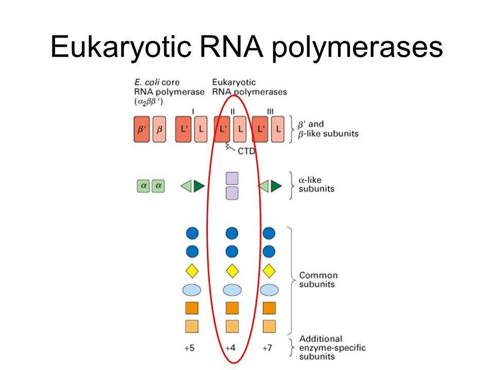 Eukaryotic transcription is complex
