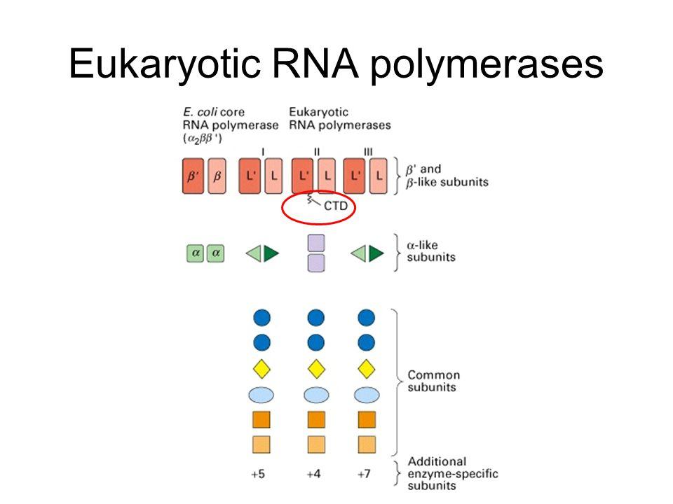 Insulators can organize the genome into transcriptionally autonomous domains Placement of insulators can create autonomous domains of gene activity