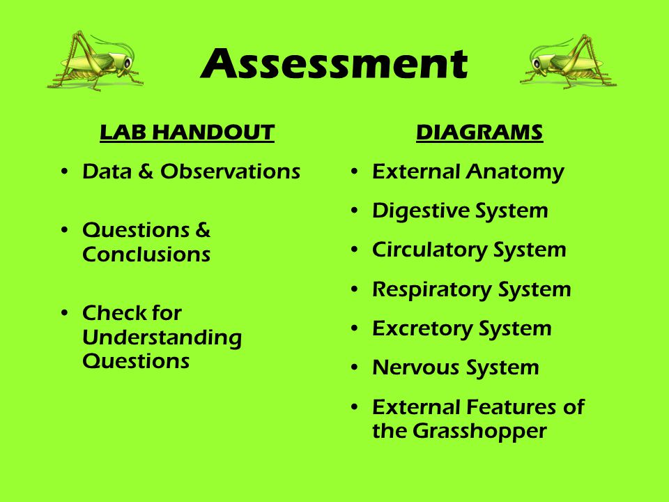 Assessment LAB HANDOUT Data & Observations Questions & Conclusions Check for Understanding Questions DIAGRAMS External Anatomy Digestive System Circulatory System Respiratory System Excretory System Nervous System External Features of the Grasshopper