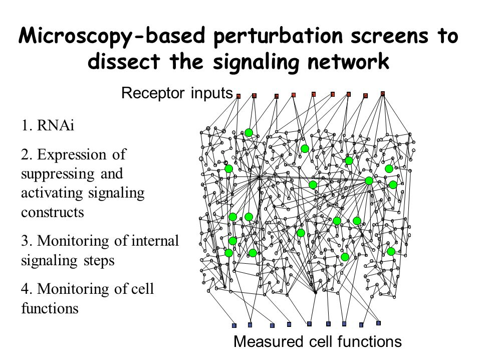 Measured cell functions Microscopy-based perturbation screens to dissect the signaling network Receptor inputs 1.