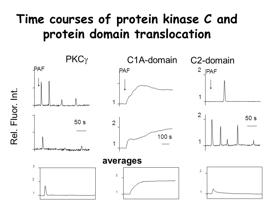 Time courses of protein kinase C and protein domain translocation C1A-domain PKC  Rel.