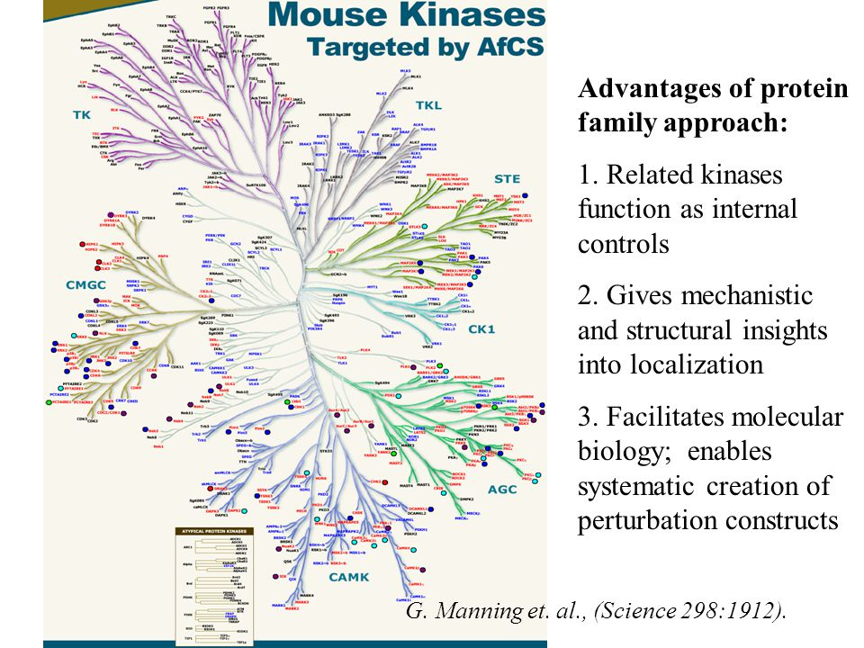 Advantages of protein family approach: 1. Related kinases function as internal controls 2.