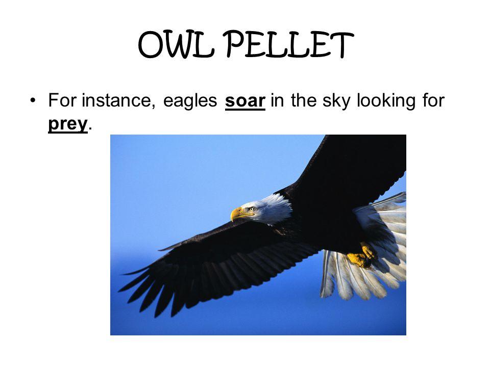 OWL PELLET For instance, eagles soar in the sky looking for prey.
