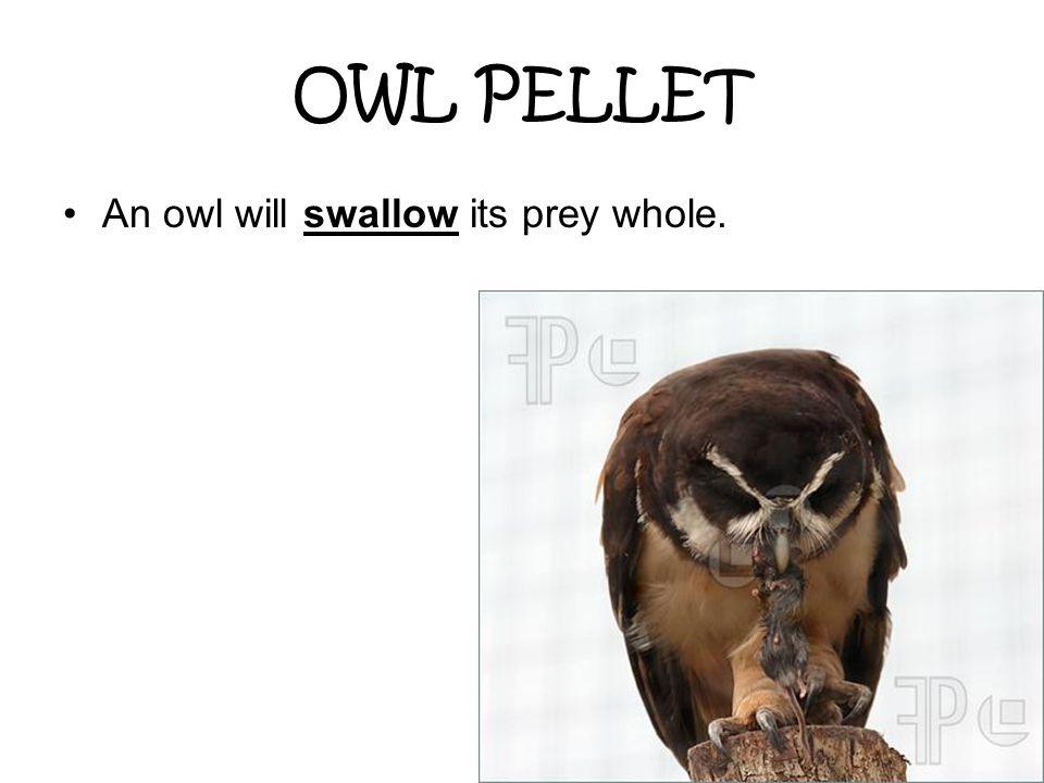 OWL PELLET An owl will swallow its prey whole.