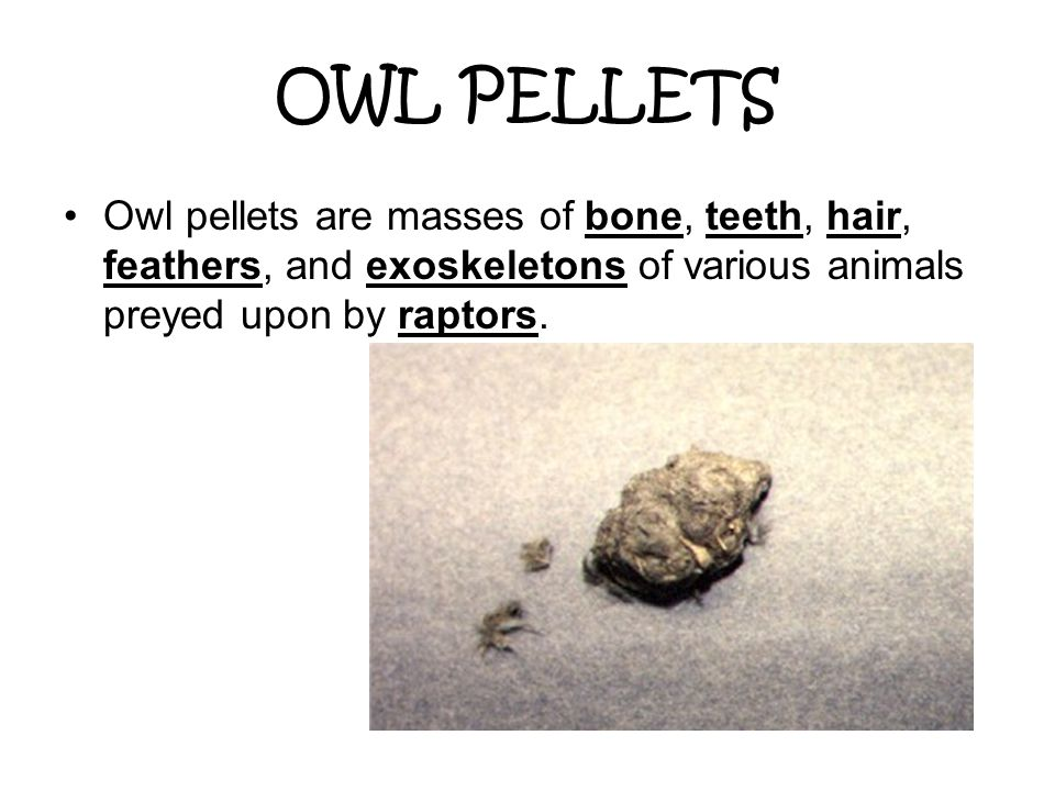 OWL PELLETS Owl pellets are masses of bone, teeth, hair, feathers, and exoskeletons of various animals preyed upon by raptors.