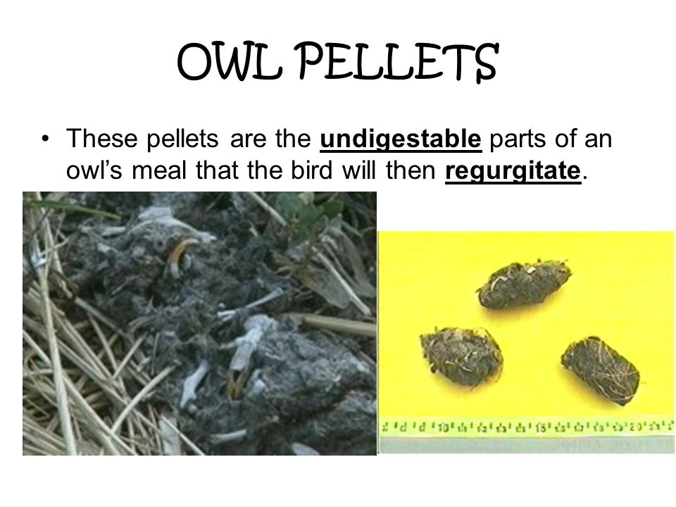 OWL PELLET For instance, eagles soar in the sky looking for prey.