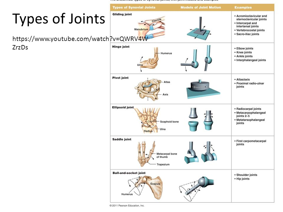 Types of Joints https://www.youtube.com/watch v=QWRV4W ZrzDs