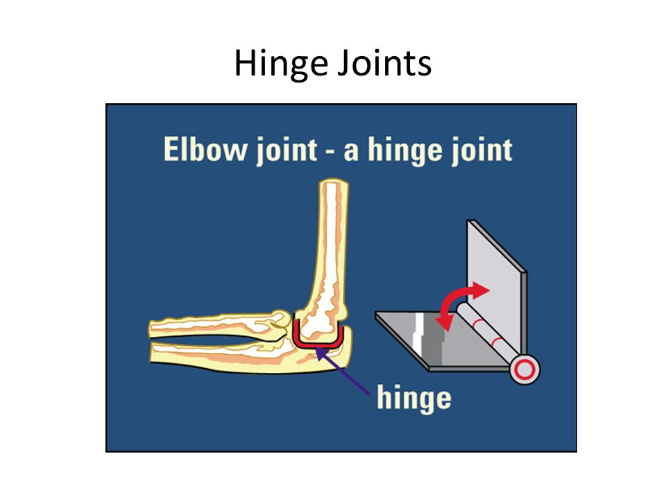 Part 3.Remove the muscle bundles from the bone. A.