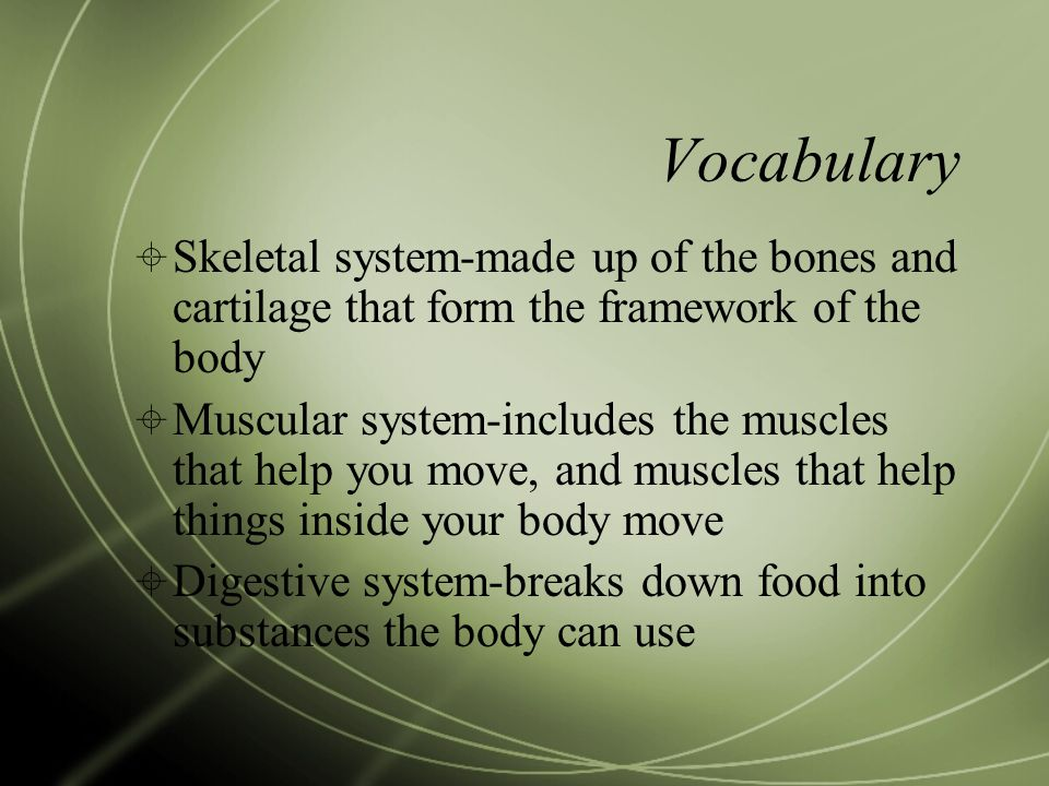 Vocabulary  Skeletal system-made up of the bones and cartilage that form the framework of the body  Muscular system-includes the muscles that help y