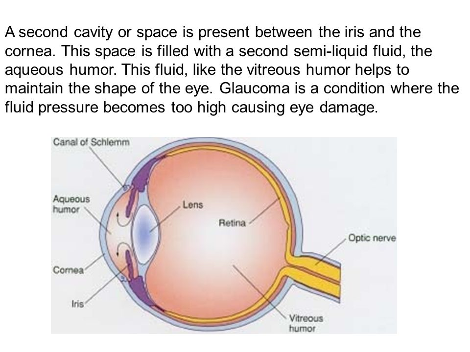 A second cavity or space is present between the iris and the cornea.