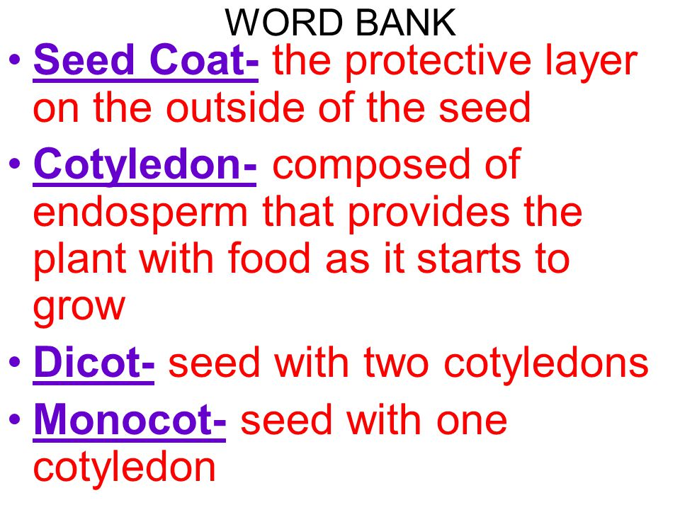 WORD BANK Seed Coat- the protective layer on the outside of the seed Cotyledon- composed of endosperm that provides the plant with food as it starts t