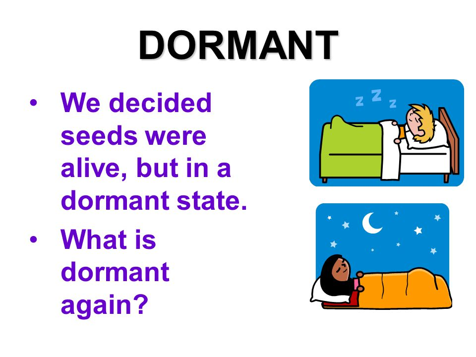 DORMANT We decided seeds were alive, but in a dormant state. What is dormant again?