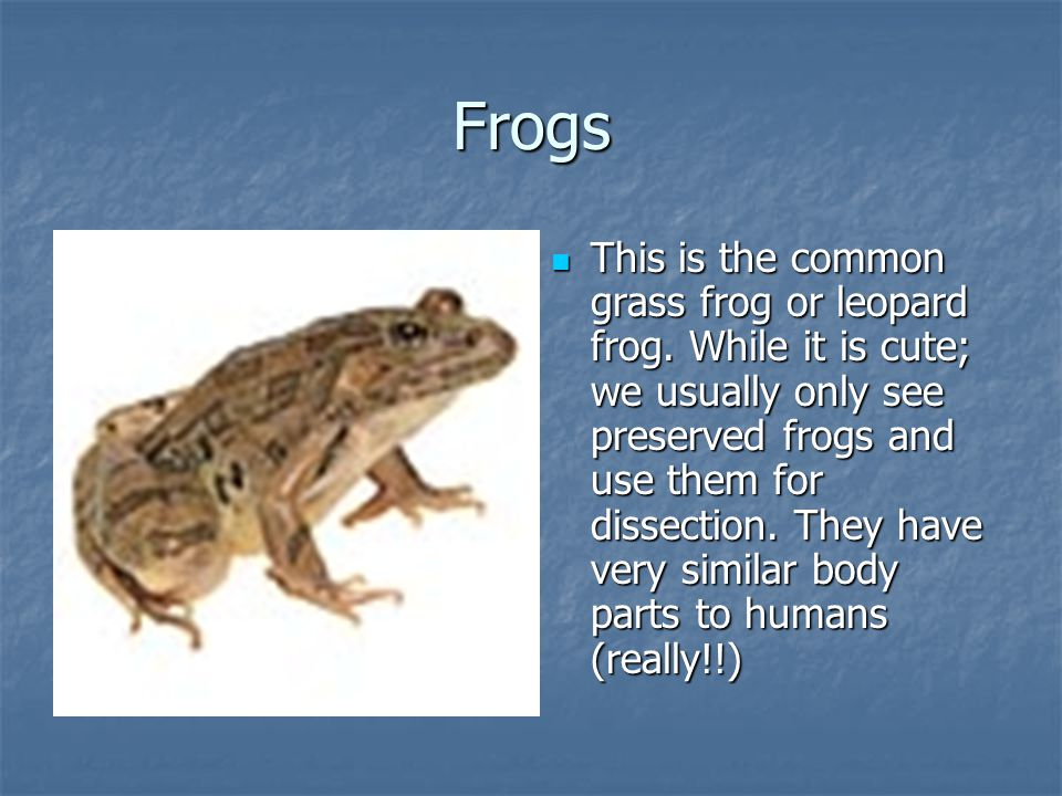Frogs This is the common grass frog or leopard frog. While it is cute; we usually only see preserved frogs and use them for dissection. They have very