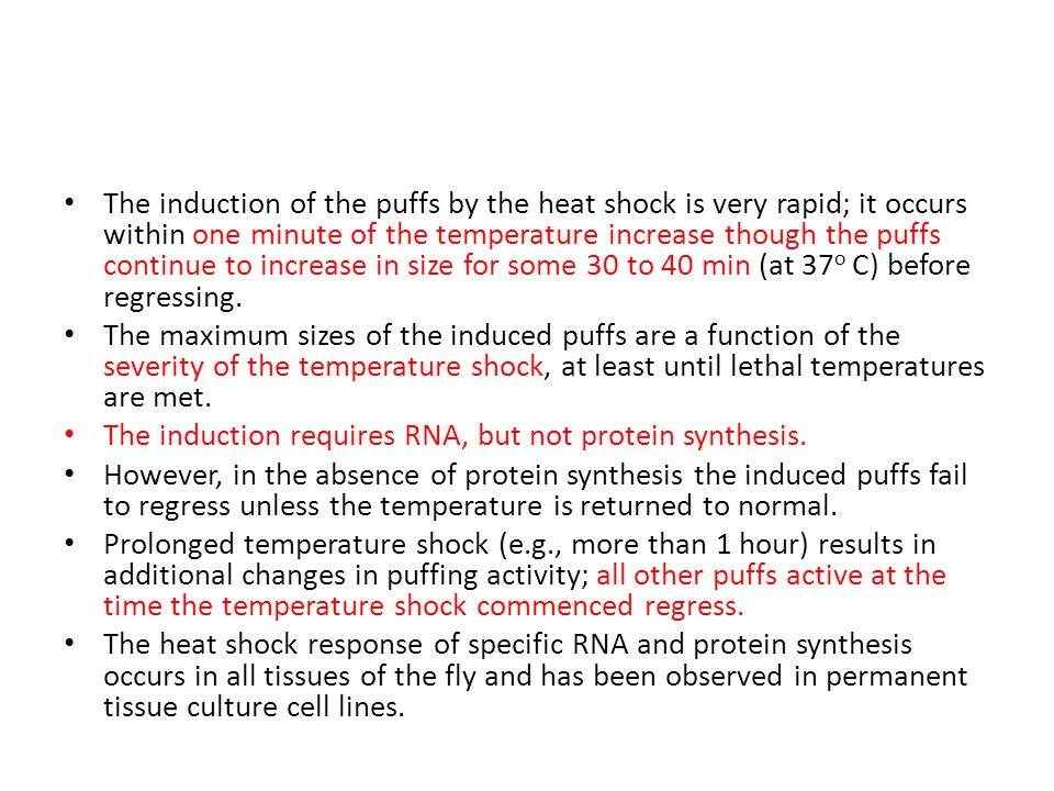 The induction of the puffs by the heat shock is very rapid; it occurs within one minute of the temperature increase though the puffs continue to incre