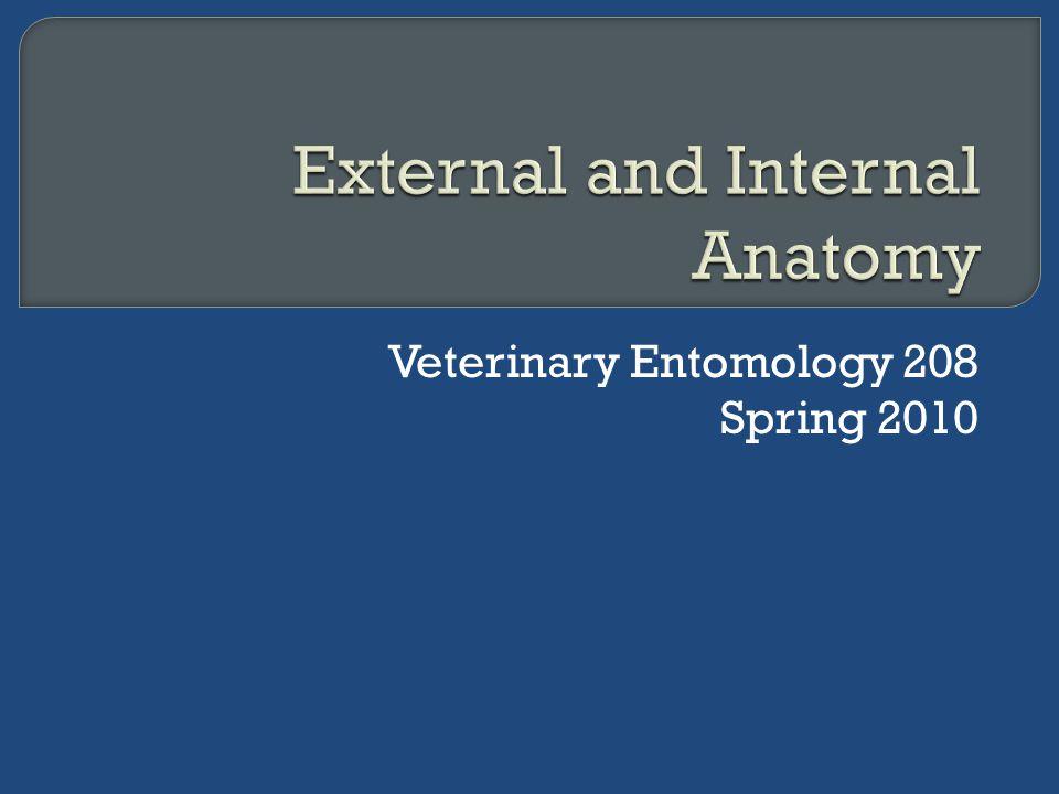 Veterinary Entomology 208 Spring 2010