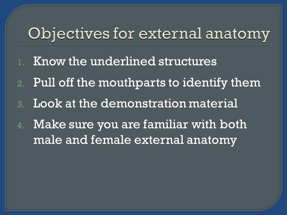1. Know the underlined structures 2. Pull off the mouthparts to identify them 3.