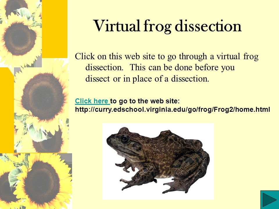 Question 3 What is the largest internal organ in the frog.