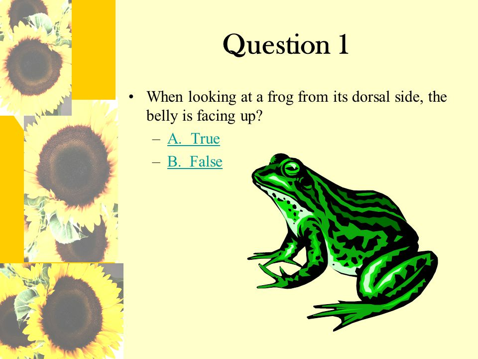 Incorrect! Sorry that is an incorrect answer! Click here to go back to the quiz
