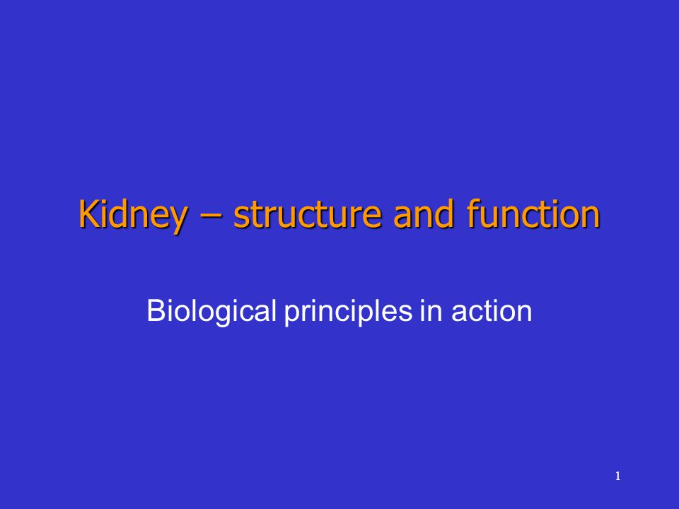 1 Kidney – structure and function Biological principles in action