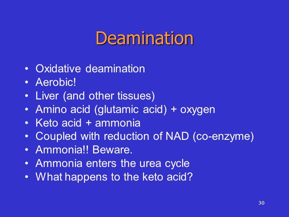 30 Deamination Oxidative deamination Aerobic! Liver (and other tissues) Amino acid (glutamic acid) + oxygen Keto acid + ammonia Coupled with reduction