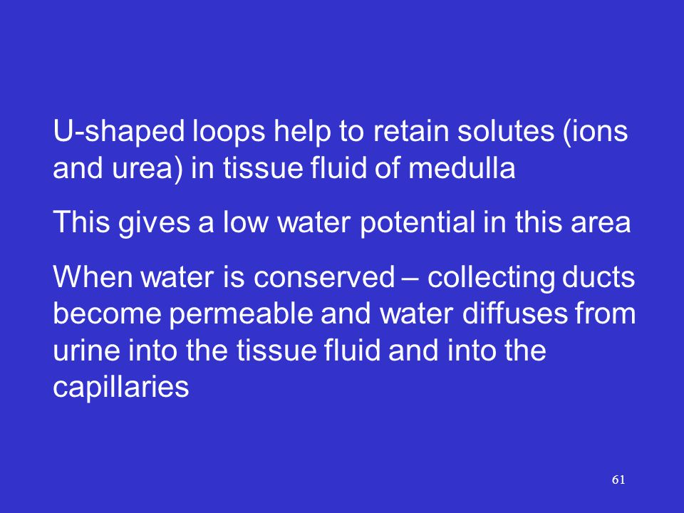 61 U-shaped loops help to retain solutes (ions and urea) in tissue fluid of medulla This gives a low water potential in this area When water is conserved – collecting ducts become permeable and water diffuses from urine into the tissue fluid and into the capillaries