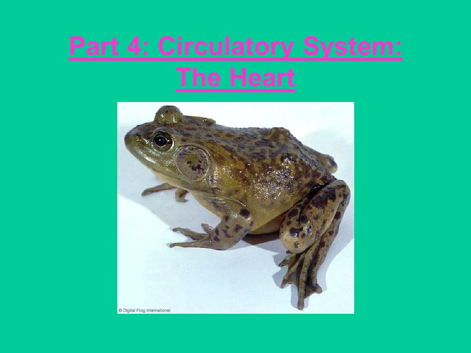 Part 4: Circulatory System: The Heart
