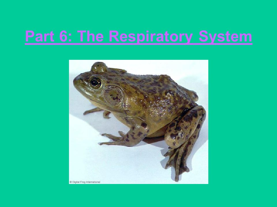 Part 6: The Respiratory System