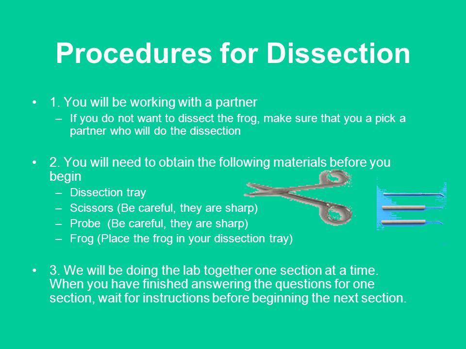 Procedures for Dissection 1. You will be working with a partner –If you do not want to dissect the frog, make sure that you a pick a partner who will