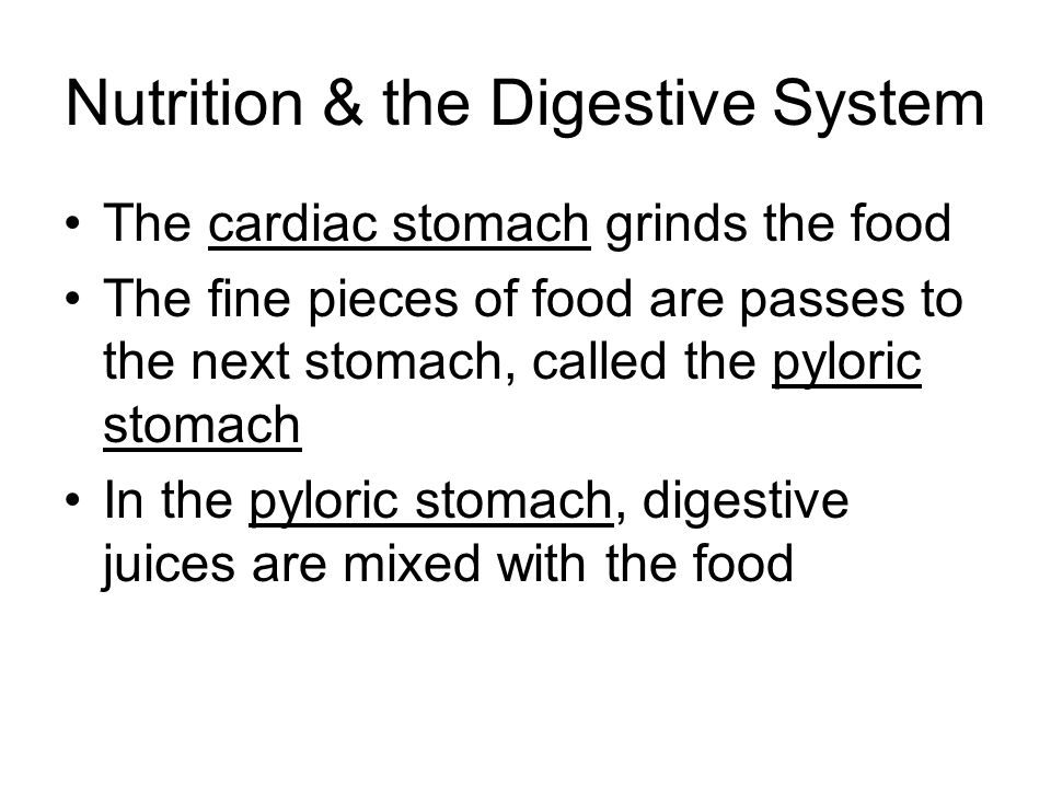 Nutrition & the Digestive System The cardiac stomach grinds the food The fine pieces of food are passes to the next stomach, called the pyloric stomac