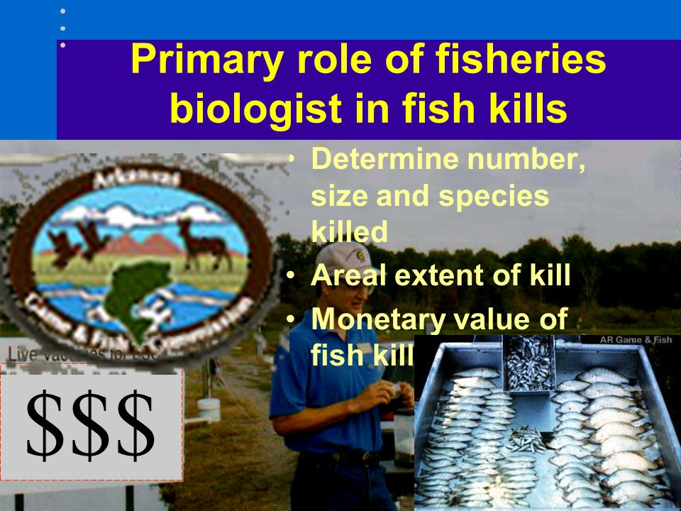 Primary role of fisheries biologist in fish kills Determine number, size and species killed Areal extent of kill Monetary value of fish killed $$$