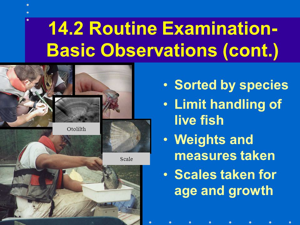 14.2 Routine Examination- Basic Observations (cont.) Sorted by species Limit handling of live fish Weights and measures taken Scales taken for age and growth Otolilth Scale